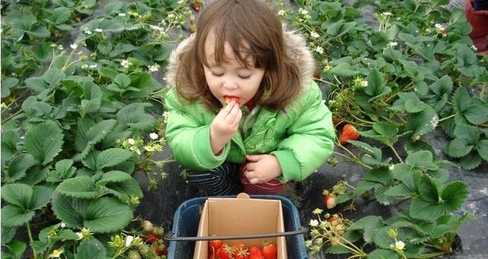 花千谷草莓园采摘园