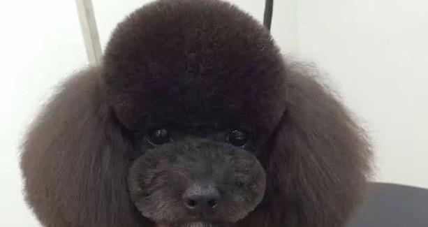 好宠DOG会所(玉景店)