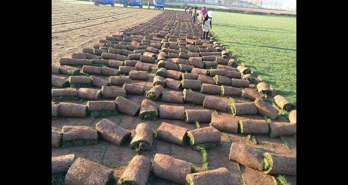 绿源草皮生产基地