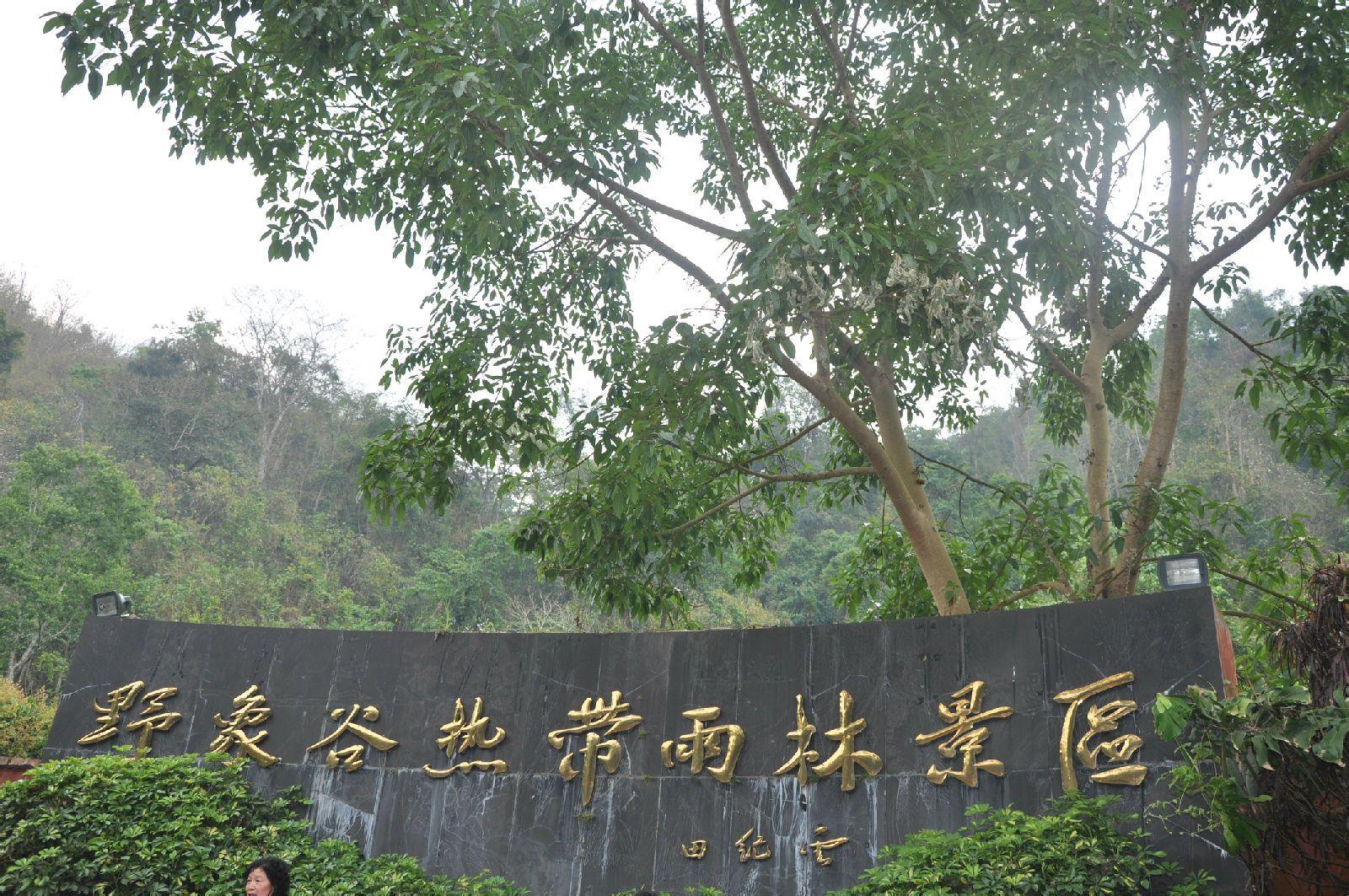 野象谷热带雨林景区图片